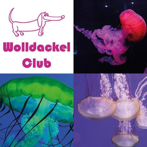 Ein Strang handgefärbte Wolle mit dem Namen Wolldackel Club – Magnificent Jellyfish von Wolldackel